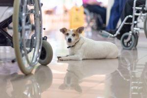 Centro Servizi Zerbato Pet Therapy
